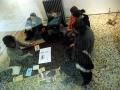 [ Régis Perray UN TAPIS SOUS LA TENTE ] 26 novembre 2011 (21)
