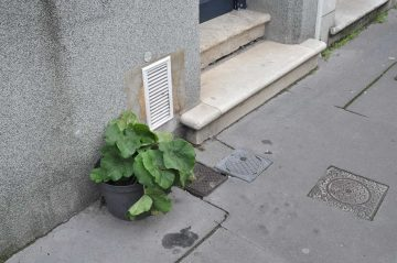 rue brizard, bordeaux, 27 janvier 2015