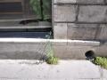 rue lafaurie de monbadon, bordeaux, 04 septembre 2013